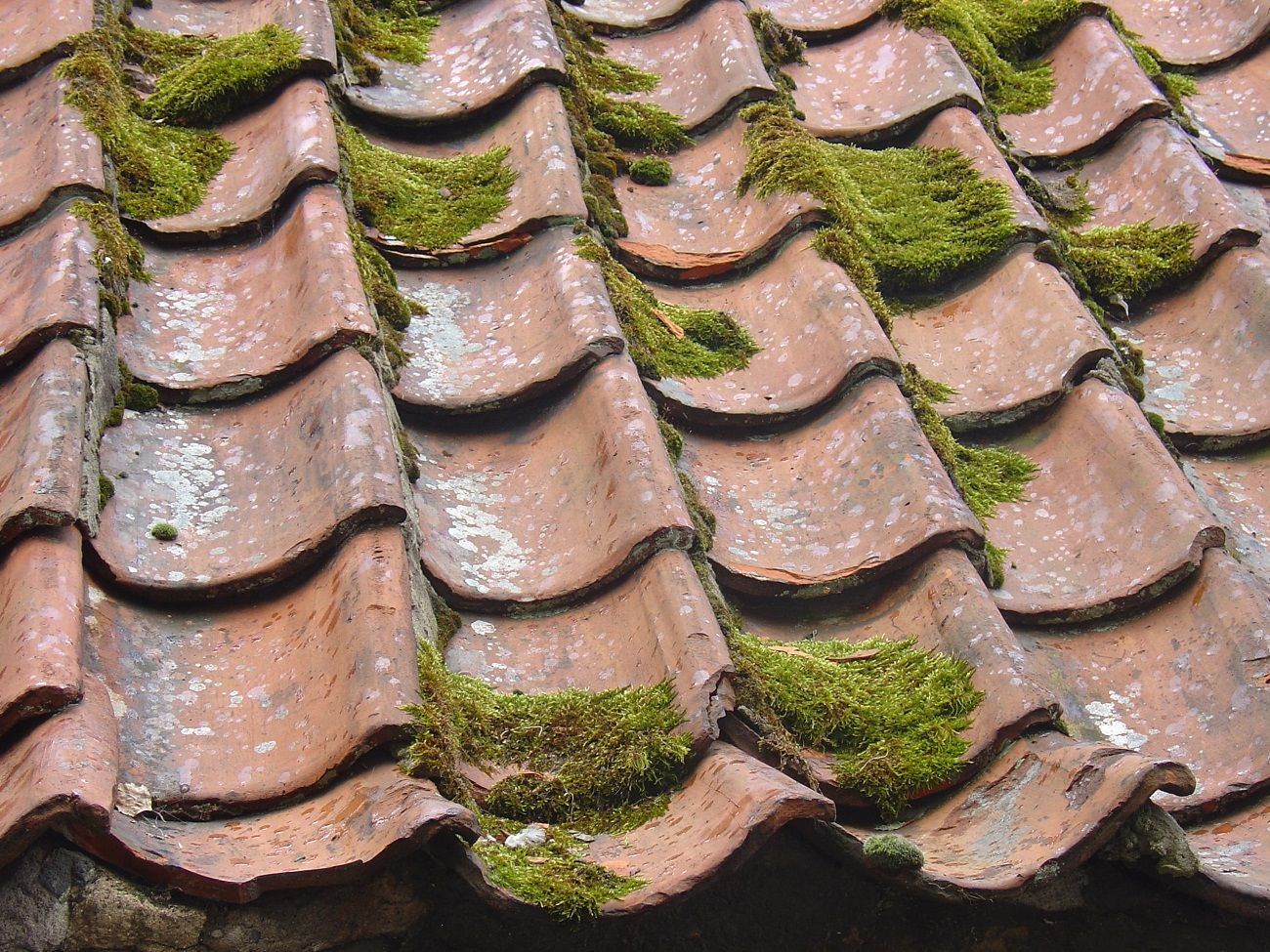 Roof Tiles with Moss