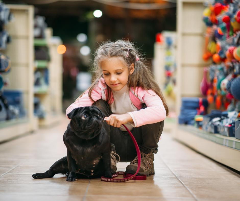 girl tries a leash on her pug dog