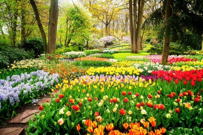 Fresh Air in Spring