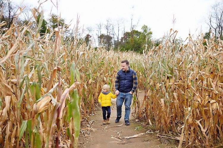 Father and Son Walking through Corn Maze