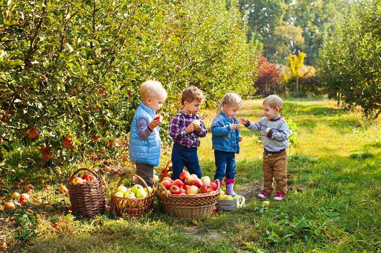 Toddlers Picking Apples at Orchard
