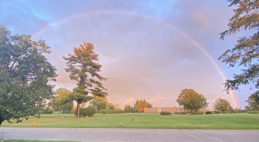 a rainbow over a field of grass with trees in the background