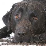 Pet Odor /<br/>Bio treatment