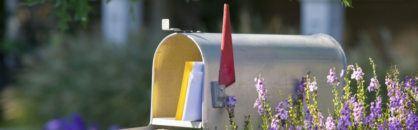 Mailbox with blooming purple flowers and maple tree branches