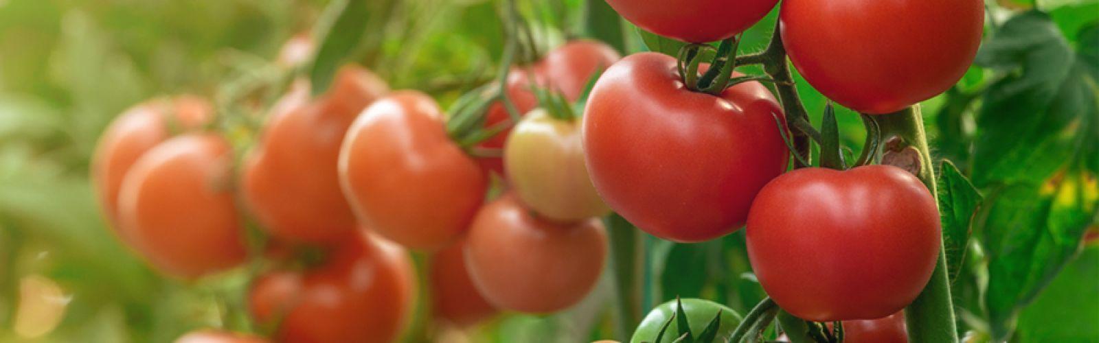 a close up of a tomato