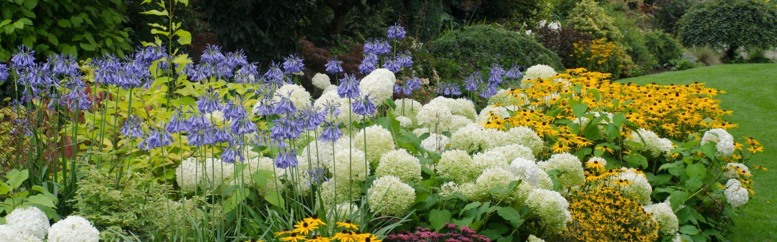 a close up of a flower garden