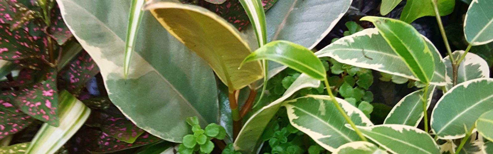 closeup of miniature green plants