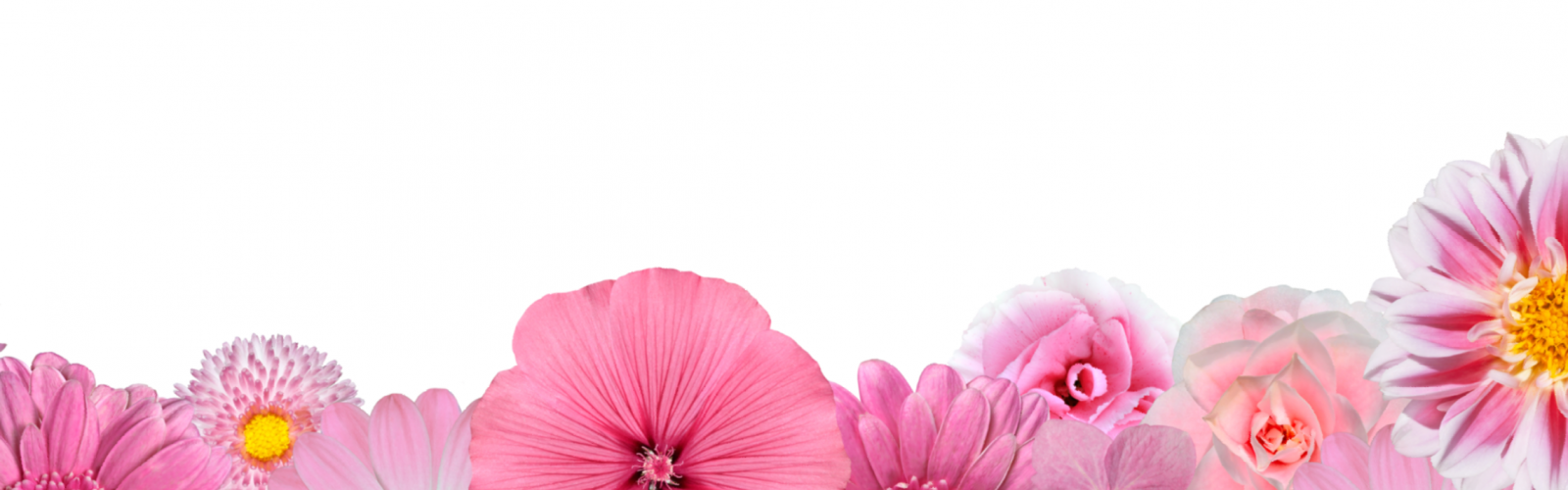 a group of pink flowers