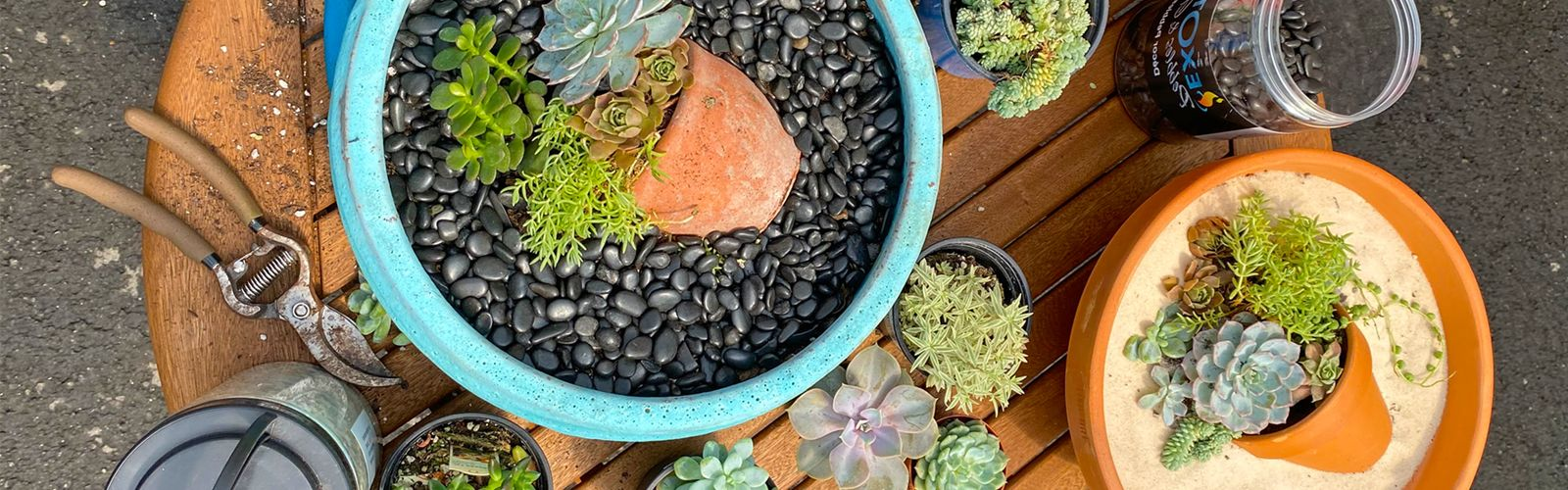 Succulents within pots