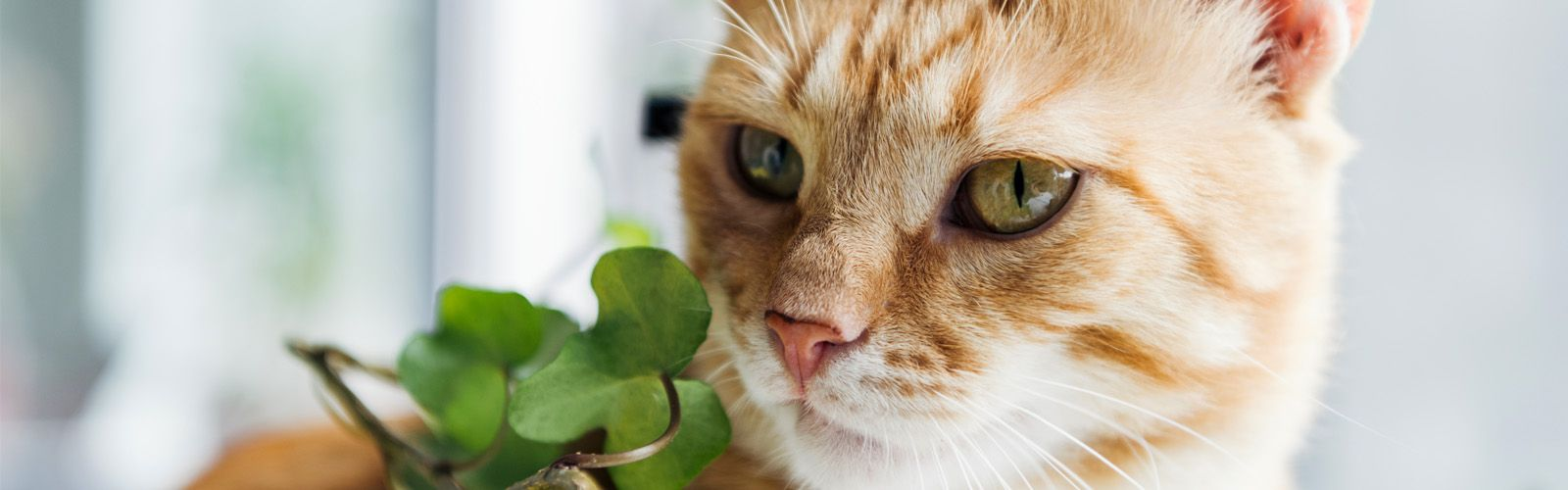 cat and houseplant