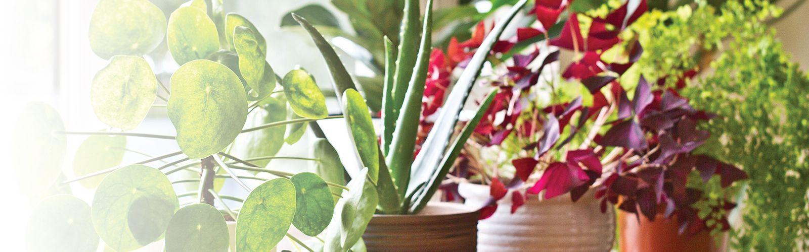houseplants in a row