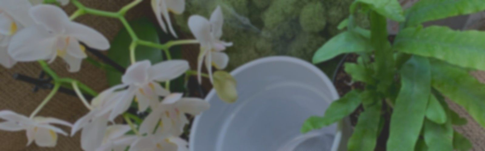 assortment of plants, orchid, fern, moss, and pottery
