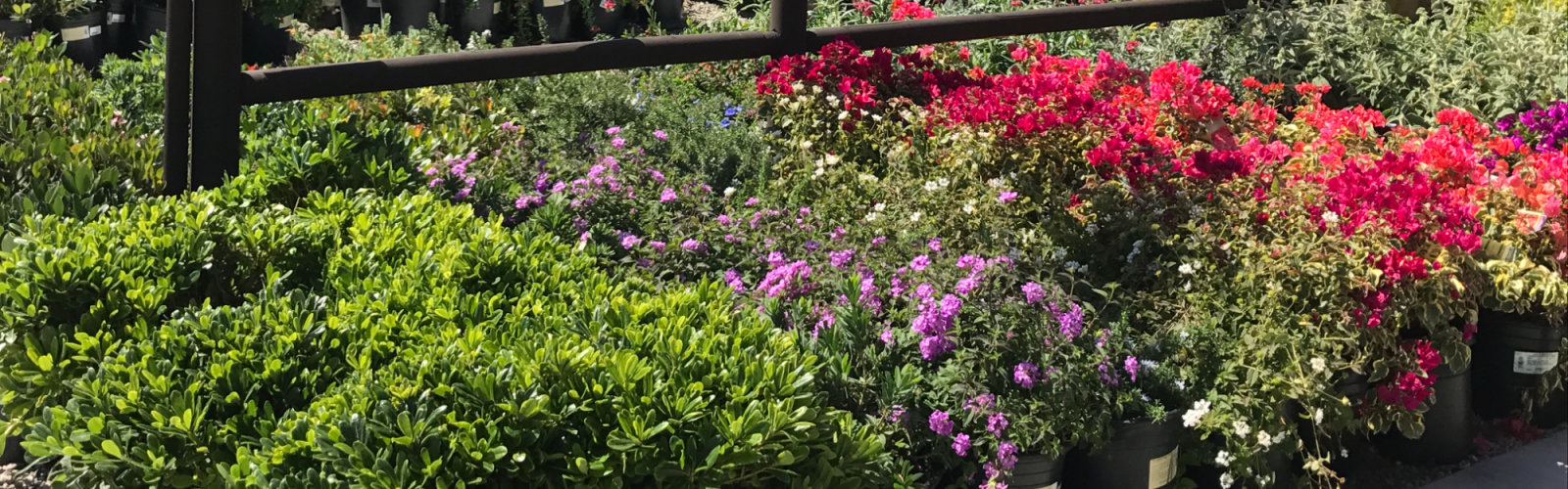 a close up of a flower garden