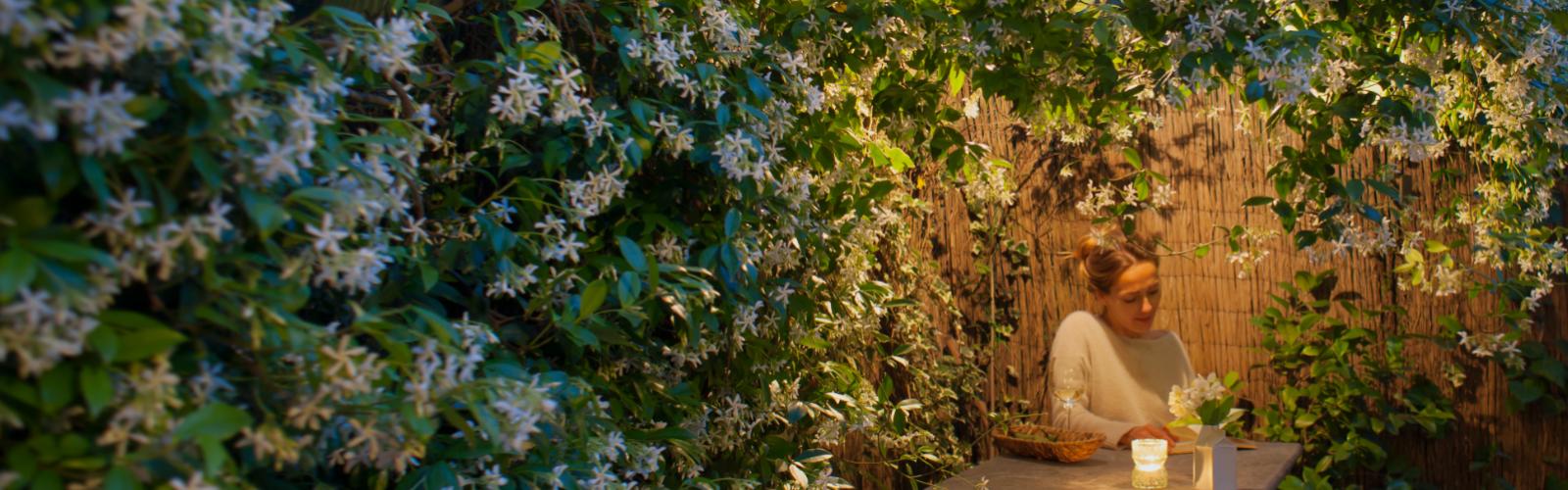 Moon Garden with blooming vines