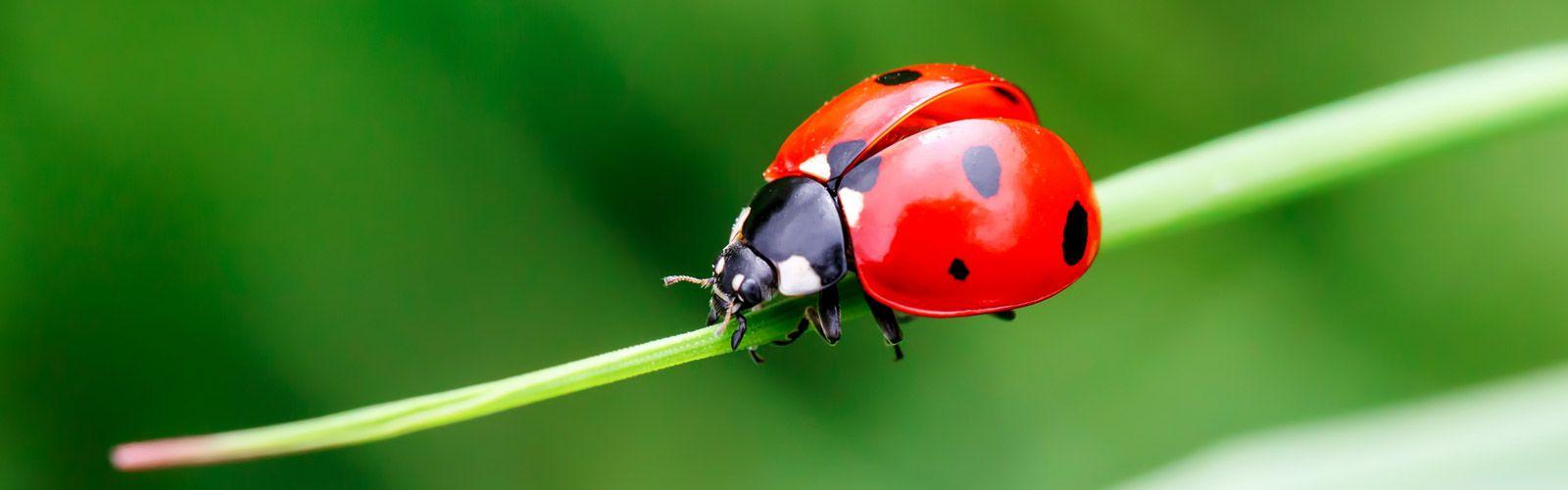 a close up of a ladybug