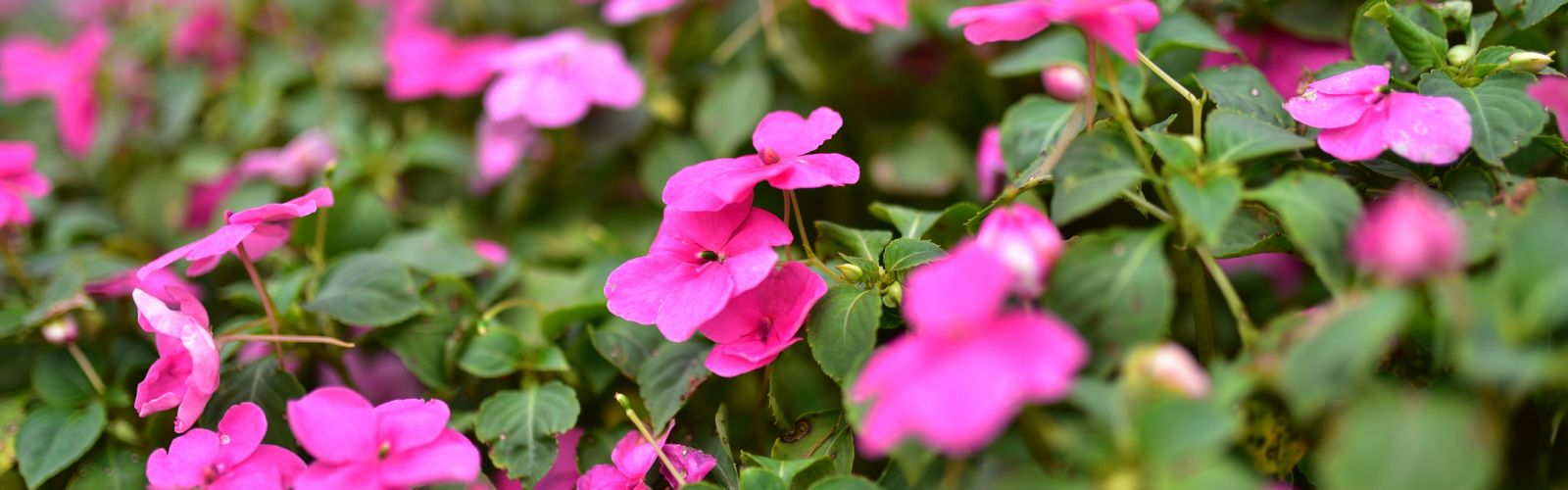 closeup on a pink flowers