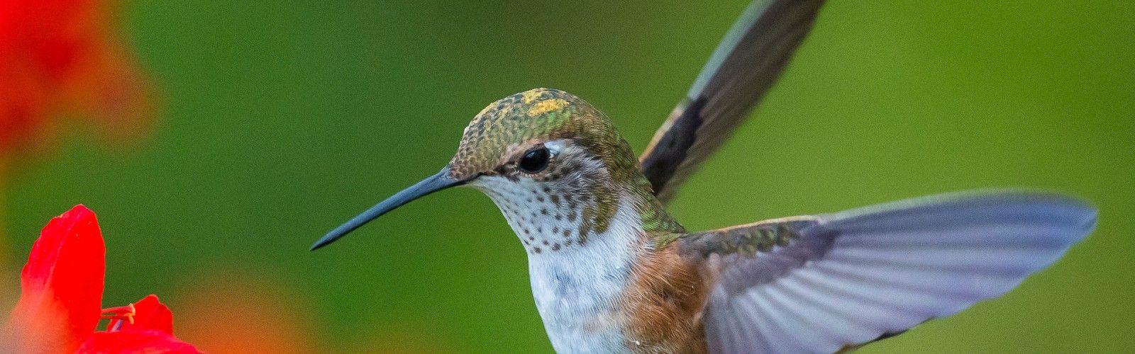 a close up of a hummingbird