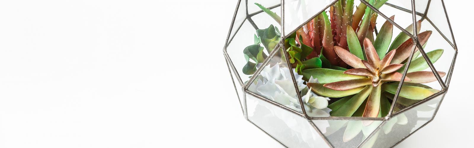 a close up of succulents