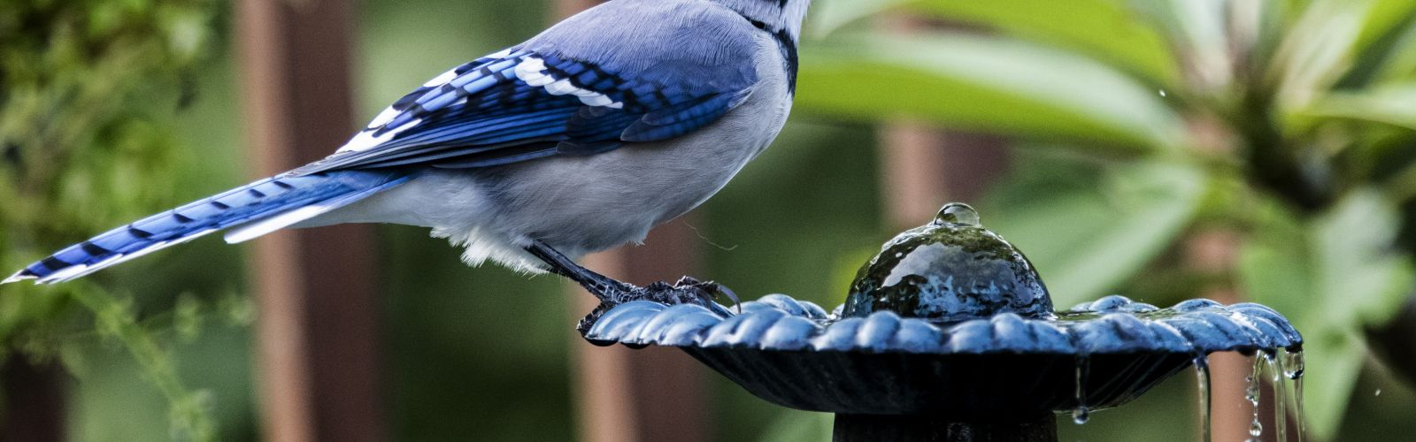 a small blue bird perched on top of a wooden bench