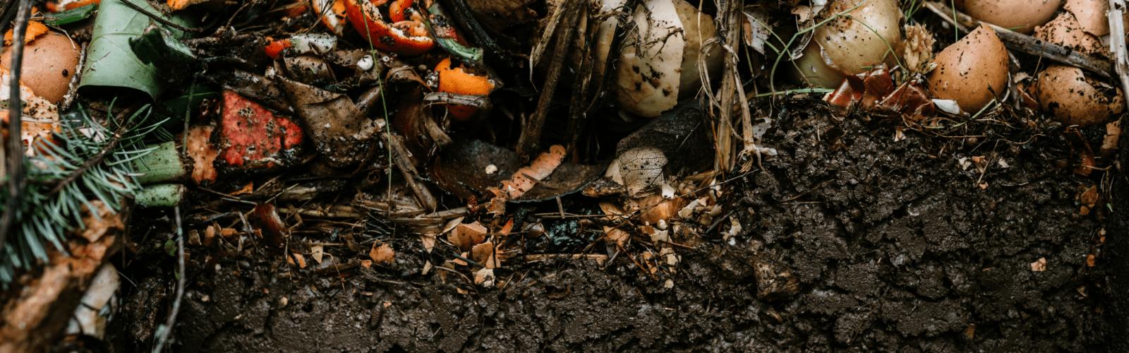 food scrap compost organic soil