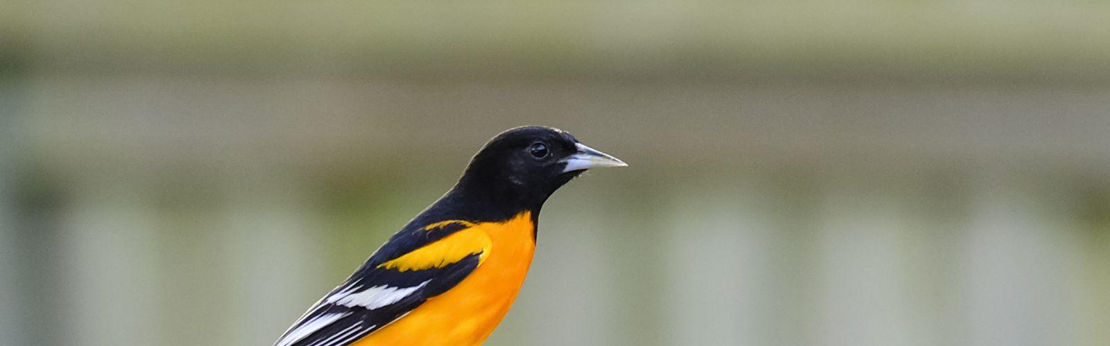 orange birdfeeder