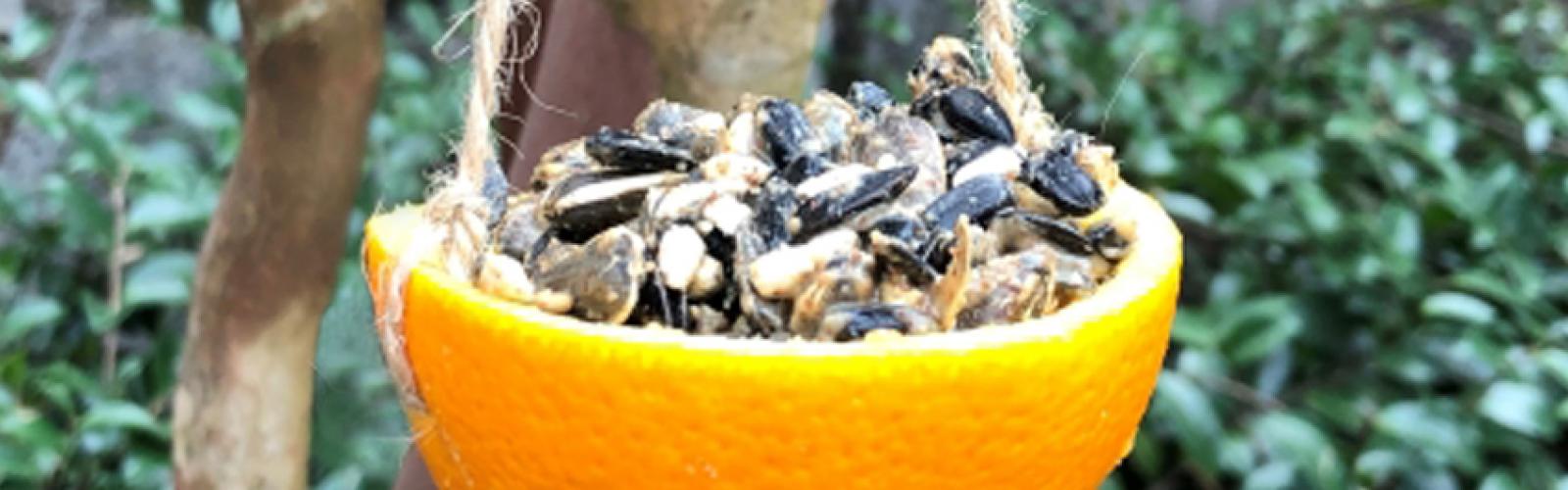 orange bird feeder with seeds