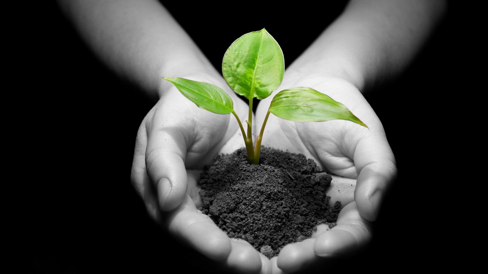 What is Plant Health Care?