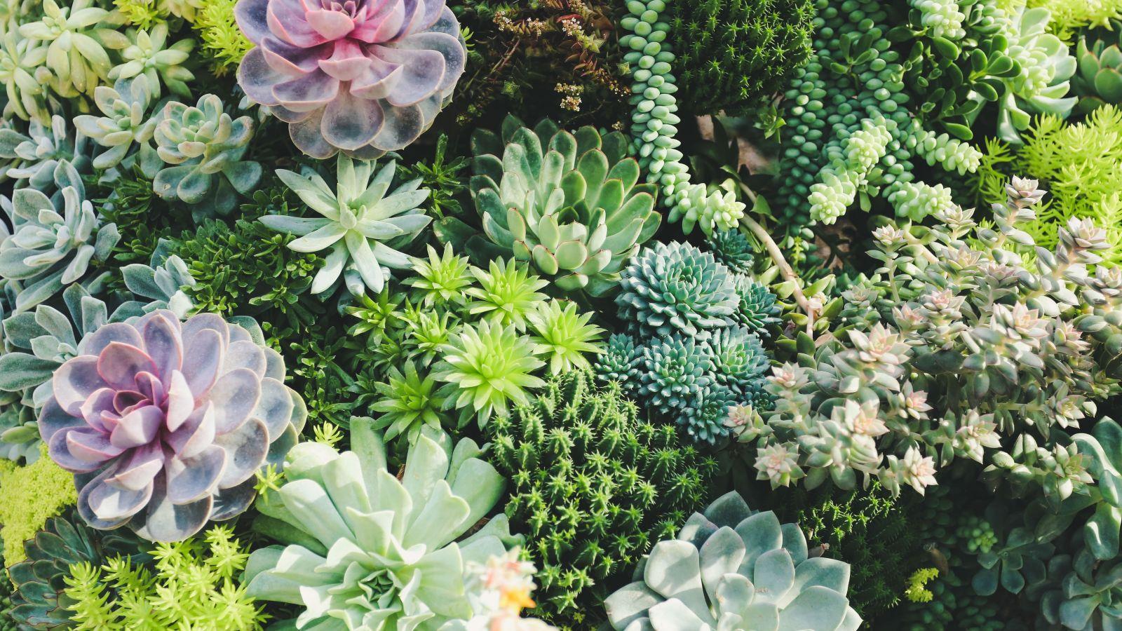 overhead view of a succulent garden