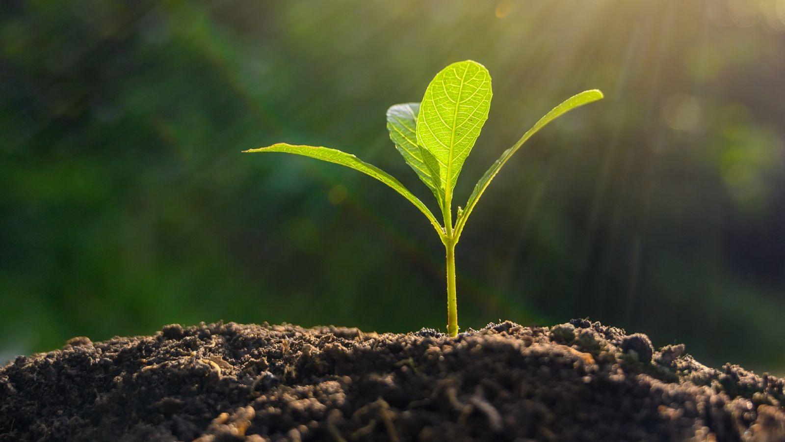 new seedling emerging from soil