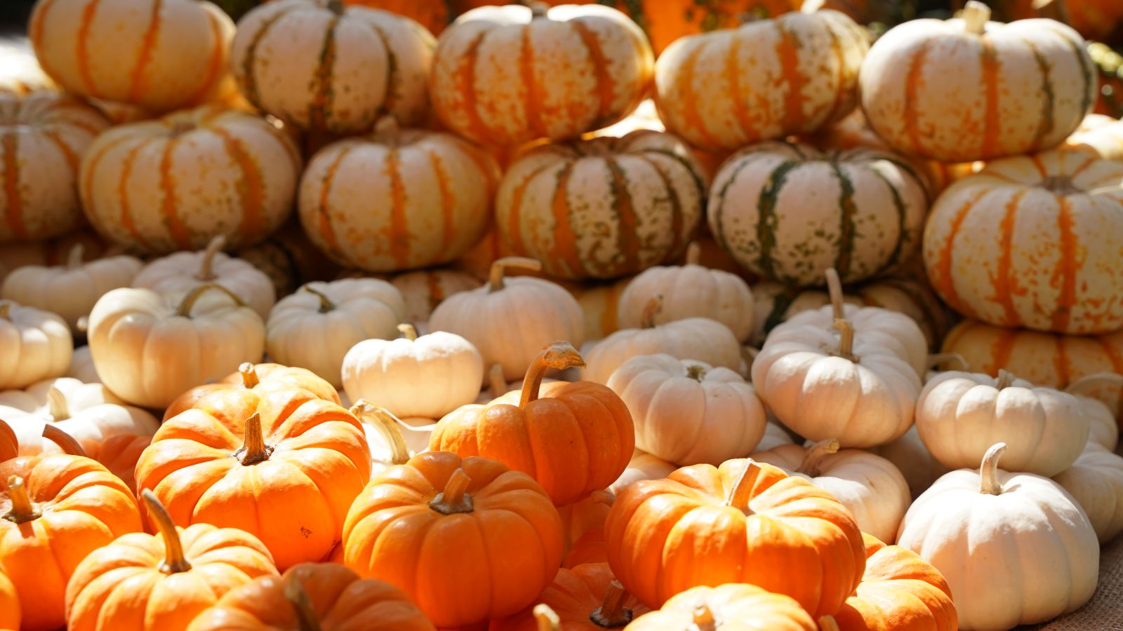 a pile of pumpkins sitting on top of a table