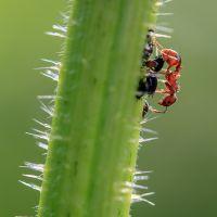 America S Pest Prevention Team Team Pest Usa