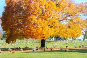 Roselawn Chapel Funeral Home