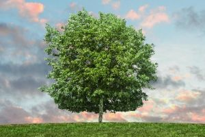 A Family Guide to Eco-Friendly Burials