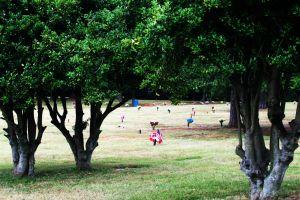 York Memorial Park