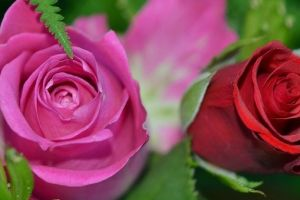 The Meanings of Different Funeral Flowers