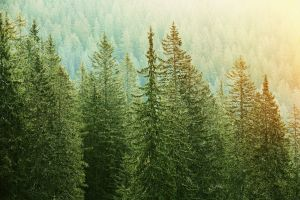 Updating Evergreen Content: Why It Matters