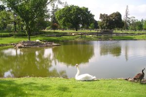 Woodlawn Memorial Park Joliet