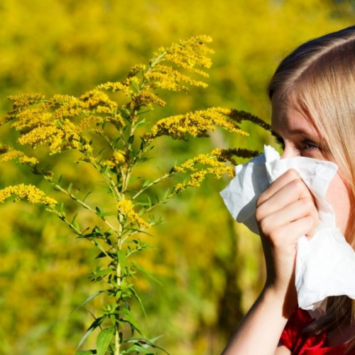 Seasonal Allergy Guide image