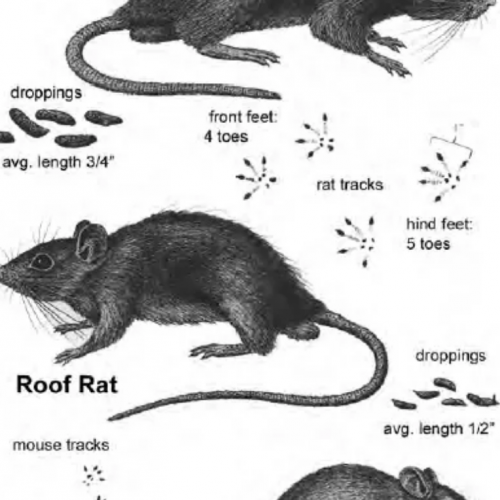 What To Do If A Rodent Dies In Your Ductwork image