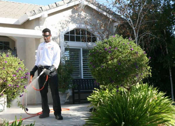 Why You Should Call the Pest Control Professionals