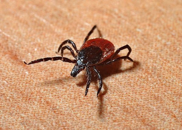 Ticked Off: Safe Tick Removal