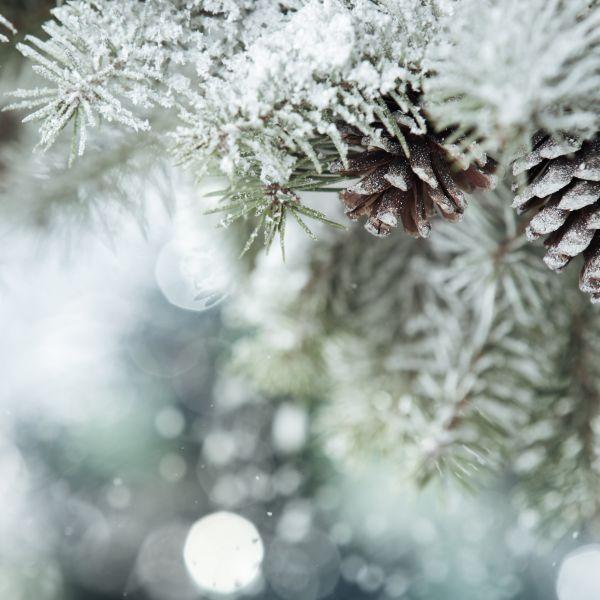 Seasonal Calendars