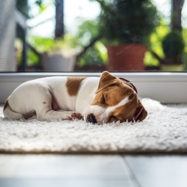What's the Best Kind of Pet Door for Your Home?