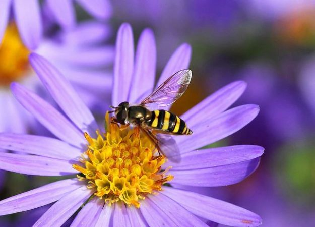 Summer safety: The bee allergy