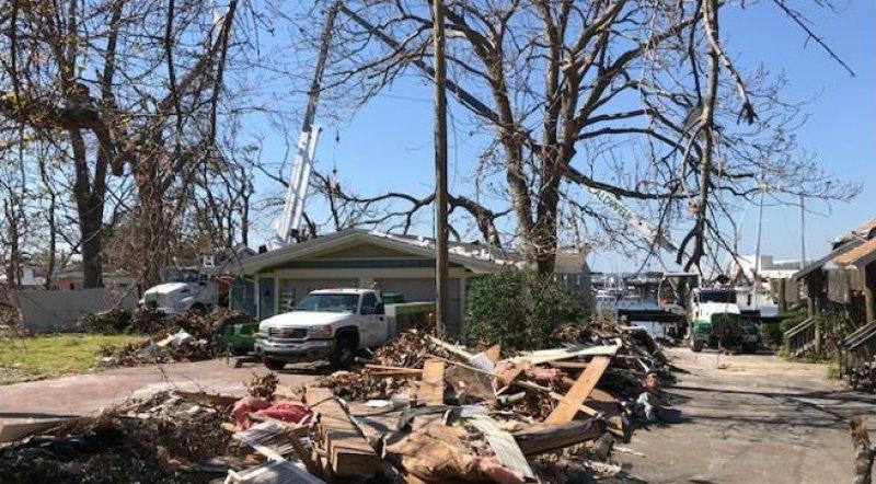 Removal of Hazardous Live Oak using Tandem Cranes image