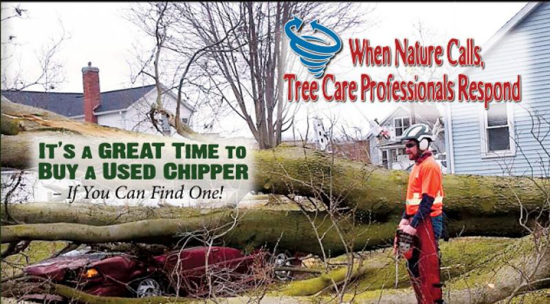 Arborist Safety Training Institute image