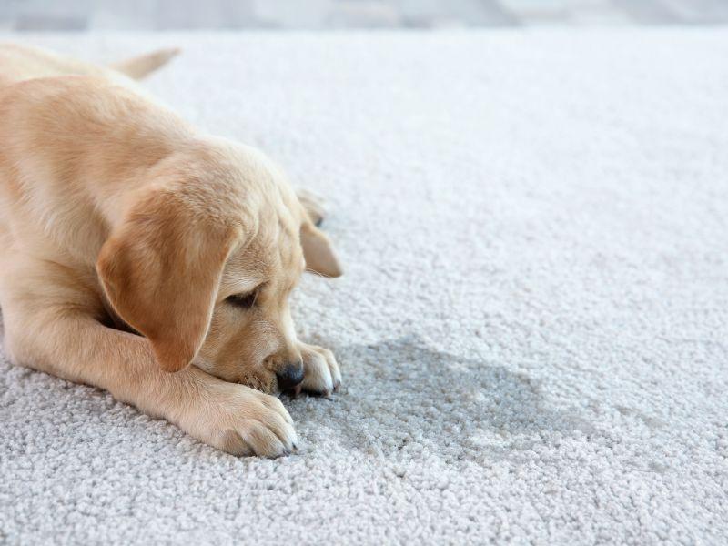 Carpet Cleaning Austin, TX | Zerorez