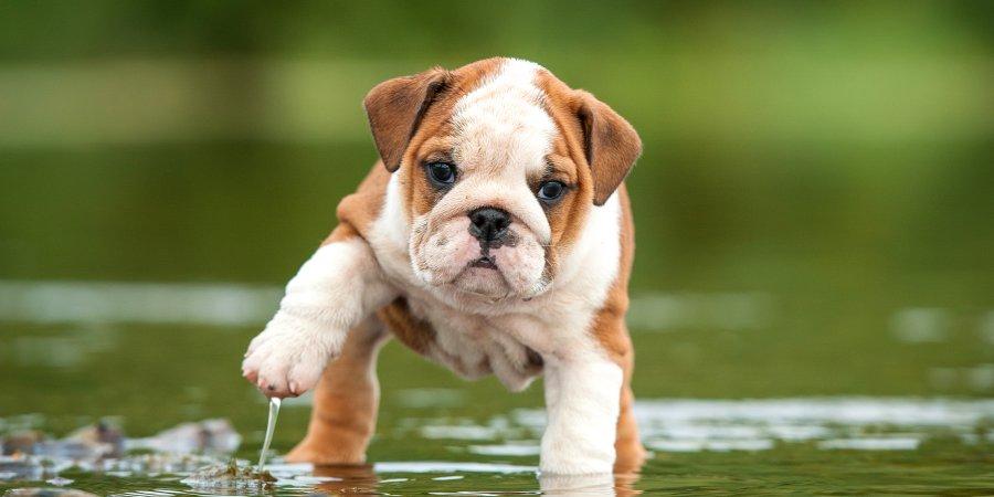 Puppy Wellness Plans