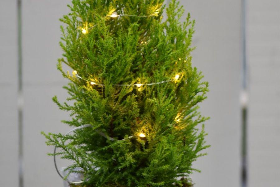 Desktop Christmas Tree DIY | Pike Nurseries