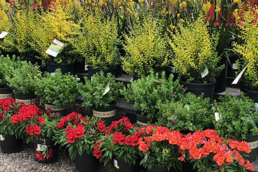 About Employee Owned Armstrong Gardens Centers Armstrong Garden Centers